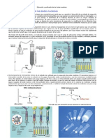 Aplicaciones-PCR-Extraccion y Purificacion de Los Acidos Nucleicos