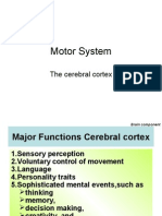 Motor System cerebral cortex
