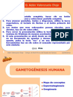 gametogenesis_b2