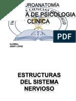 Estructura Del Sitema Nervioso