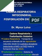 cadena-respiratoria-fosforilacion