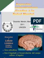 2011 X 13 Telencéfalo introducción a la anatomía psiquiátrica para publicar