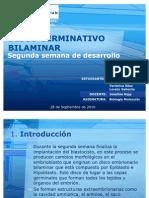 39065221 Disco Germinativo Bilaminar