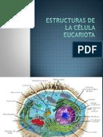 Morfología y estructuras fúngicas1