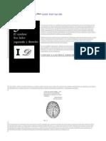 Derecho Izquierdo Cerebro