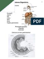 Aula - sistema digestivo
