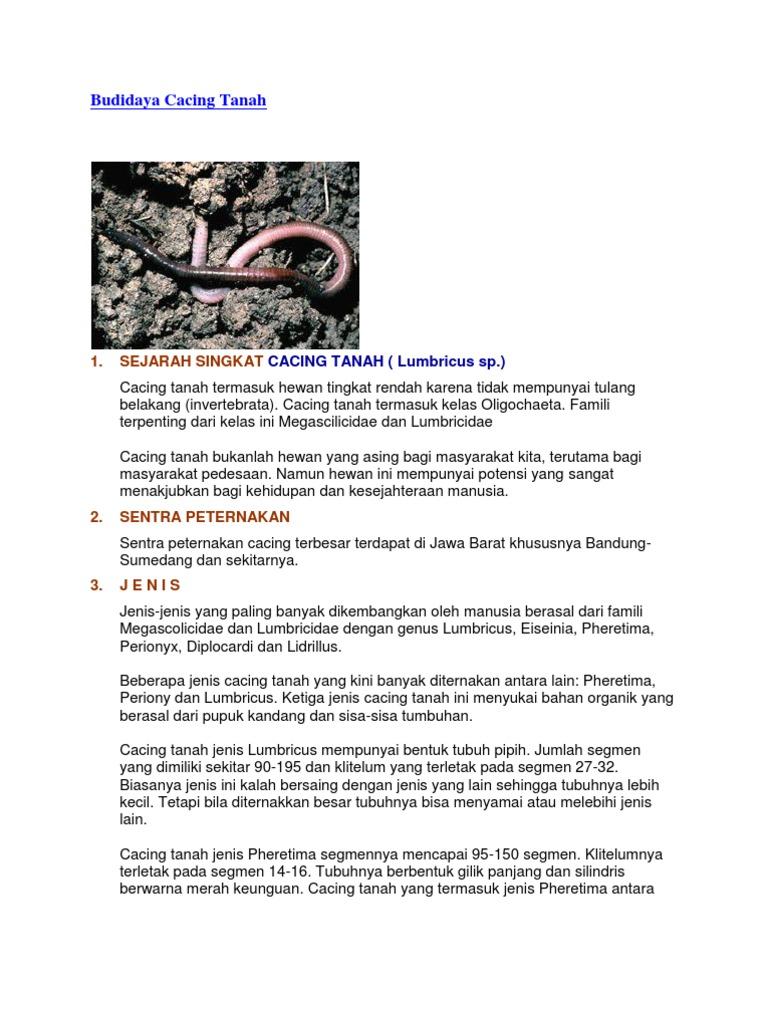 5600 Koleksi Gambar Hewan Cacing Tanah HD