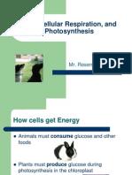 ATP, Cellular Respiration, And Photosynthesis
