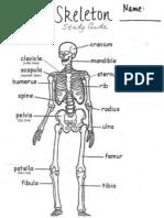 Bones for Blog