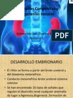 anomalias genitourinarias1