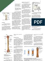 resumo_de_osteologia