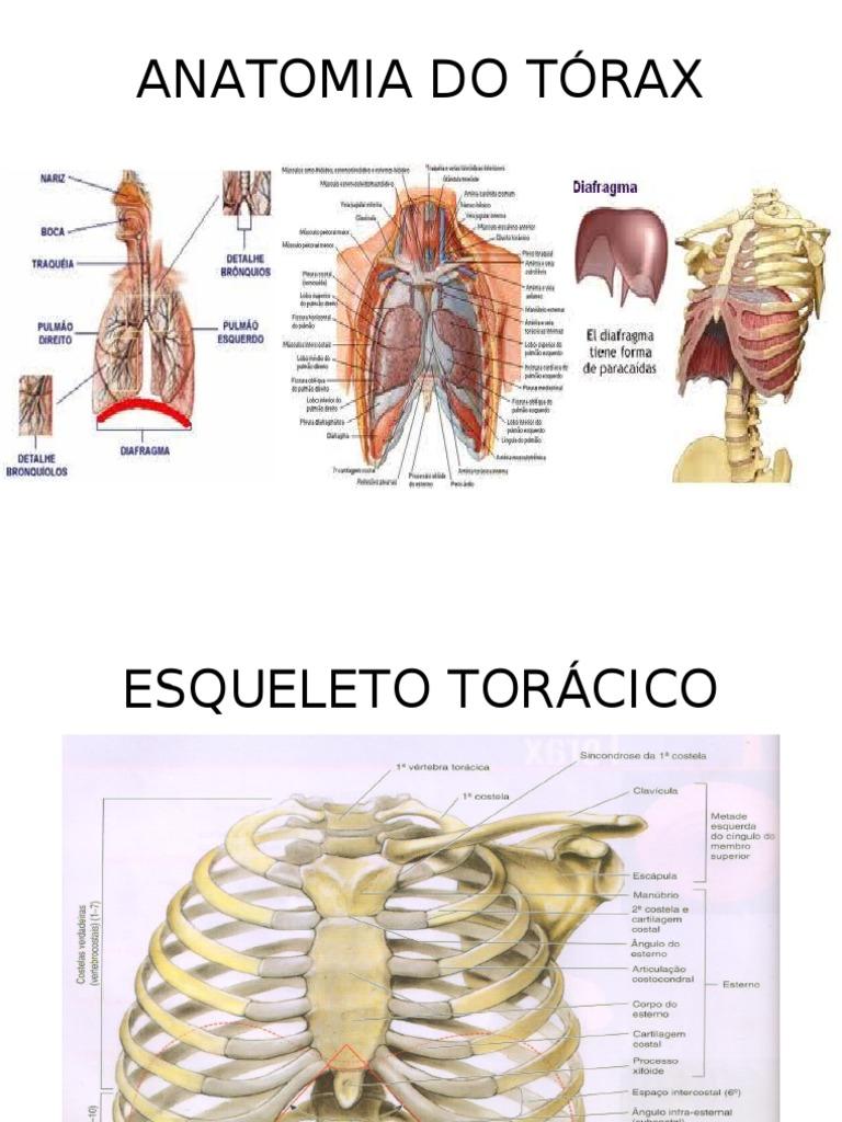 ANATOMIA DO TÓRAX