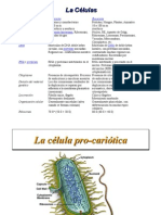09-04-2008 Celulas eucariotas, procarioticas y los virus