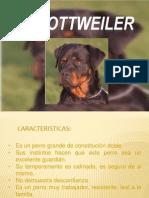 El Rottweiler