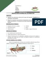 Introducción a la Entomología