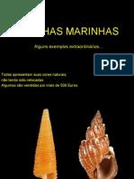 Conchas Marinhas