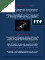 Características generales de protozoarios