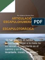 Articulación Escapulohumeral y escapulotorácica