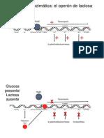 Microbial Genetics 2