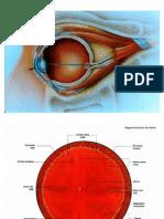 Desprendimiento de retina y hemorragia vítrea