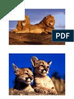 aslanlar_resim-001