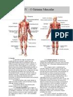 Apostila Sistema Muscular - Teoria