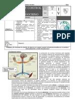 2011 s4 Citeam Gp 07 Sistema Endocrino