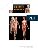 corpo humano relatorio