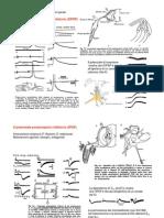 7. Neuroni neuromodulazione