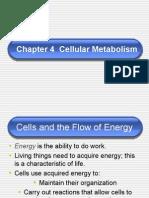 Chapter 4 - Cellular Metabolism