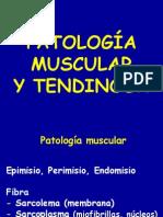 17 - patología musculos y tendones