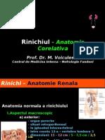 23284575-Rinichiul-–-Anatomie-Corelativa