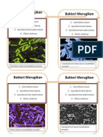 bakteriii