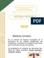 SISTEMA URINARIO FINALLLL