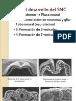 Tema Embriologia SN - Copia