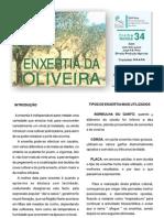 enxertia da oliveira