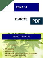 BG 14 reino plantae-[2]