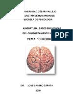 Cerebro y Hemisferios[1]