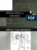 Hoy Org Visc Renal Urinario