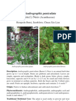 12b1705 Andrographis Paniculata Sambiloto