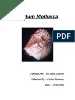 Phylum Molluscasim