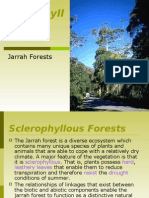 Sclerophyllous Forests