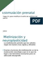 Estimulación prenatal