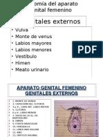 -Anatomia del aparato genital femenino