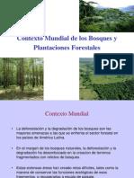Contexto Mundial de Los Bosques y Plantaciones Forest Ales