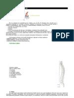 Anatomia de Columna Vertebral
