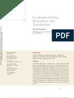 Citpkininas -Actividad y Traslocacion