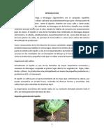 Monografia de La Col