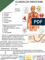 endocrin bt_bc_ 2010[1]