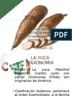 LA YUCA
